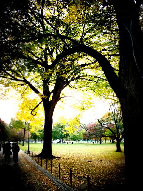 Boston Commons in Autumn